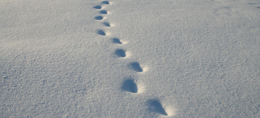 Lonesome footsteps in the snow