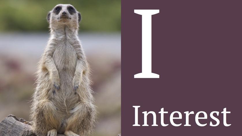 Meerkat showing interest